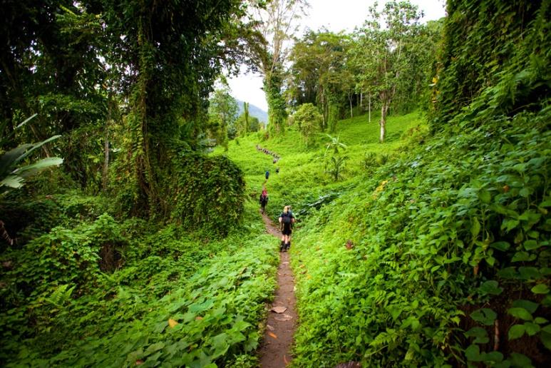 Trekkers on the long climb to Isurava from Hoi and Deniki on the Kokoda Track, Papua New Guinea.