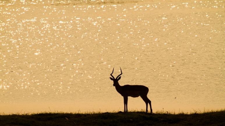 African Wildlife, Botswana